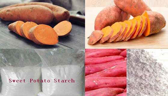 sweet potato starch processing line manufacturer